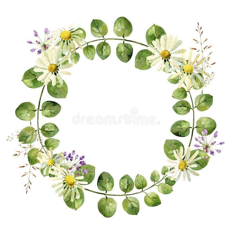 叶子和春黄菊花圆的框架  库存例证