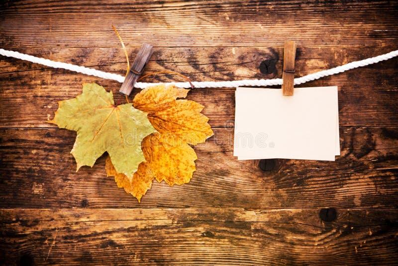 叶子和木头背景说明。 库存图片
