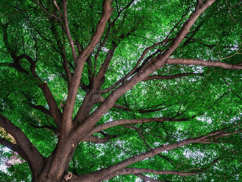 叶子和树、阳光和美好的自然 库存照片