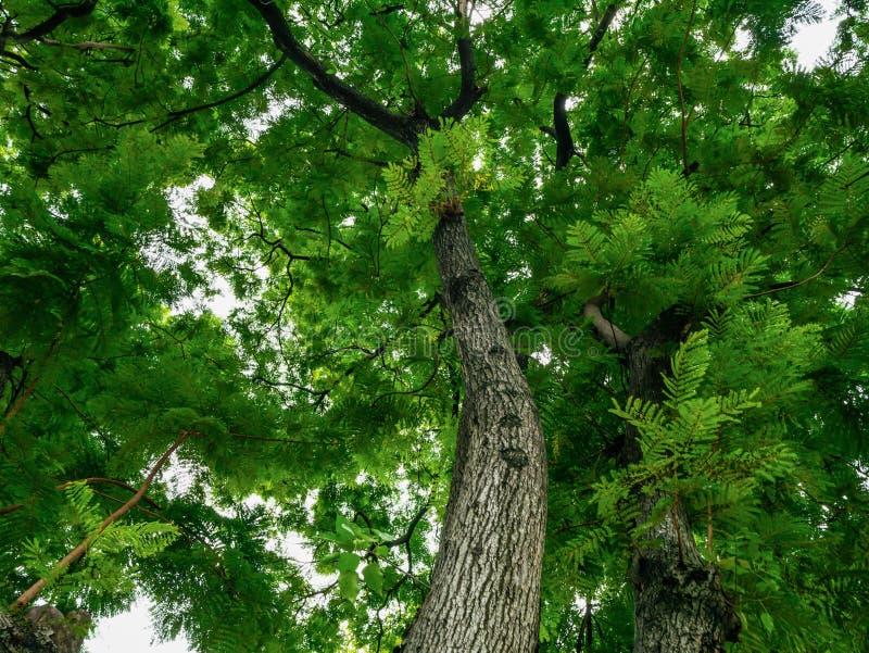 叶子和树、阳光和美好的自然 免版税库存图片