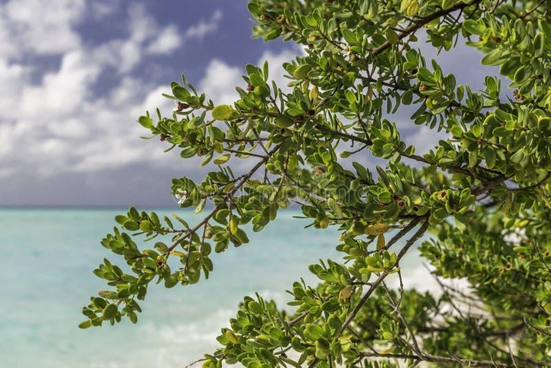 叶子和树在海滩在马尔代夫 库存图片