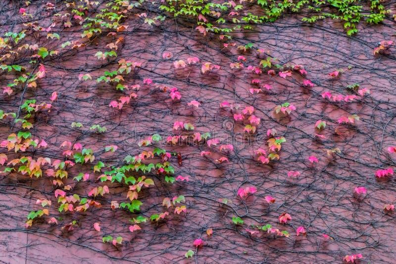 叶子和桃红色墙壁 库存照片