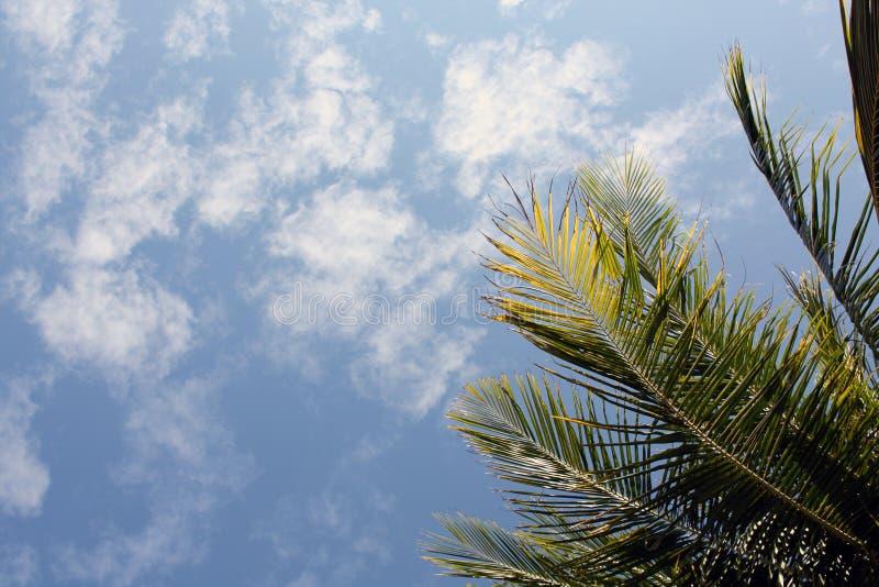 叶子和清楚的天空视图 免版税库存图片