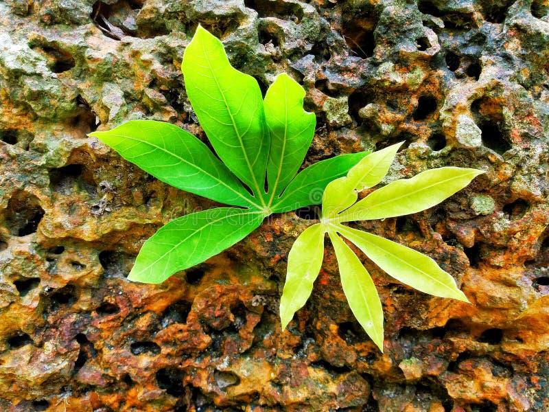 叶子和石头 免版税图库摄影