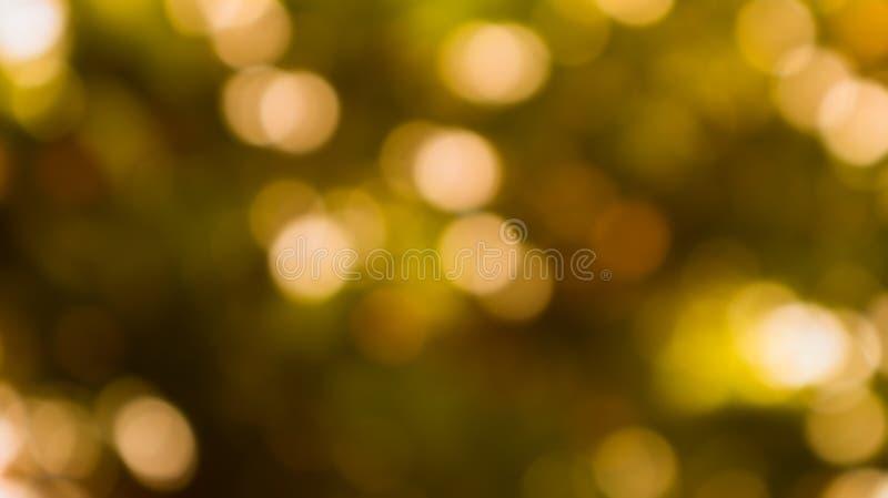 叶子和阳光Bokeh在黑背景 维度sphe 免版税库存照片