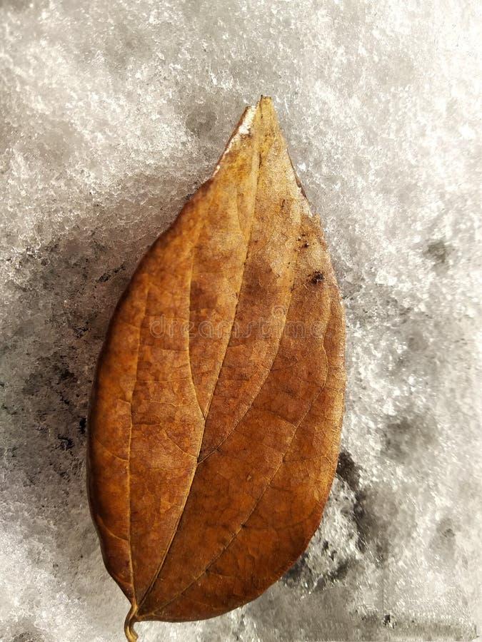 叶子和雪 库存图片
