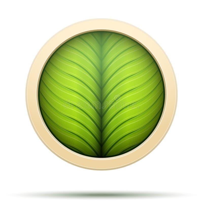 绿色叶子圆的象自然和生物标签 背景例证鲨鱼向量白色图片