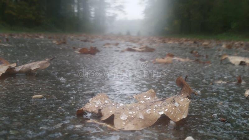 叶子在与大雨的秋天 免版税库存图片
