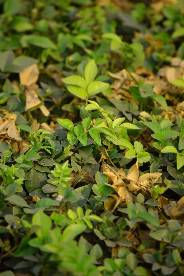 叶子在庭院里 免版税图库摄影