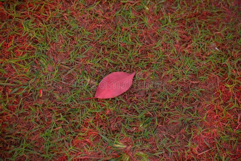 叶子在庭院里 库存图片