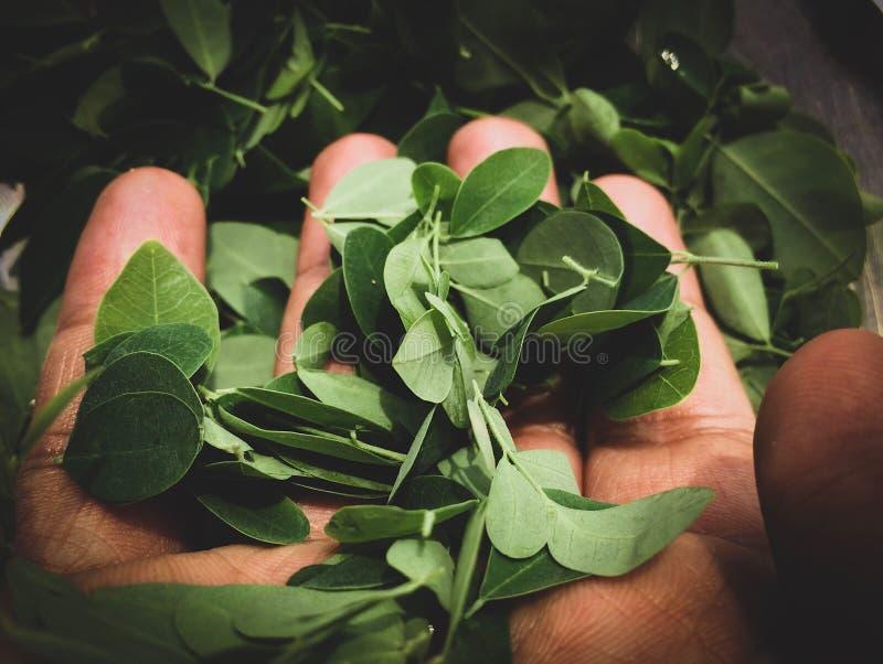叶子在手上 去绿色!保存环境,除我们的后土外 免版税库存图片