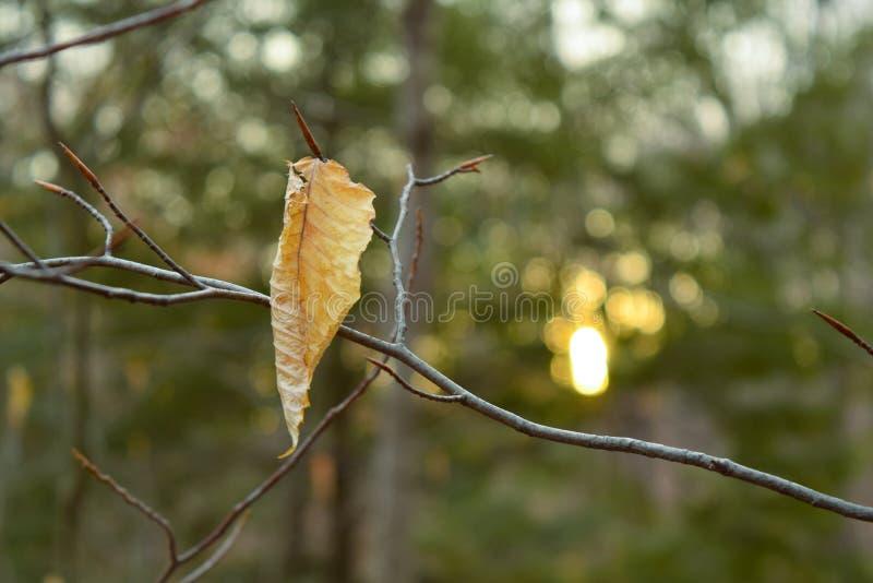 叶子在森林里 免版税库存图片