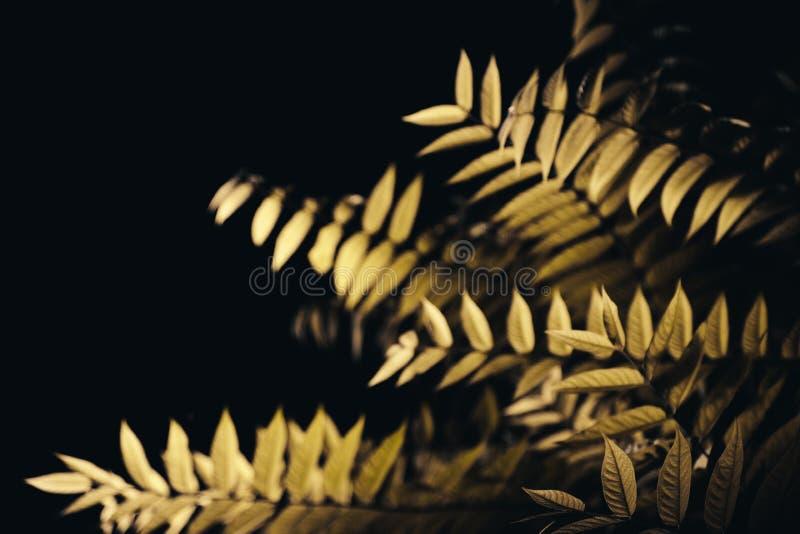 叶子在黑暗的夜 免版税库存图片