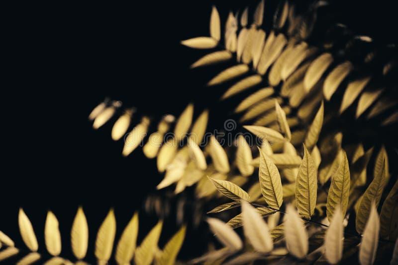 叶子在黑暗的夜 图库摄影