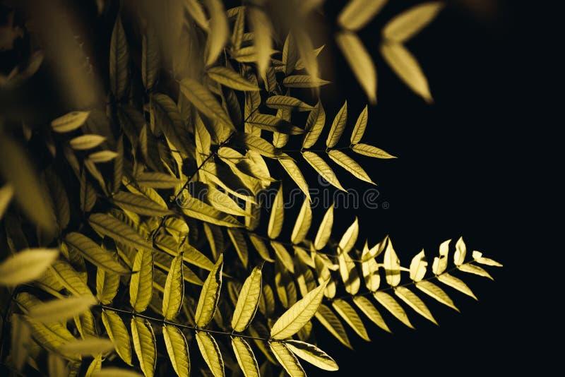 叶子在黑暗的夜 免版税图库摄影