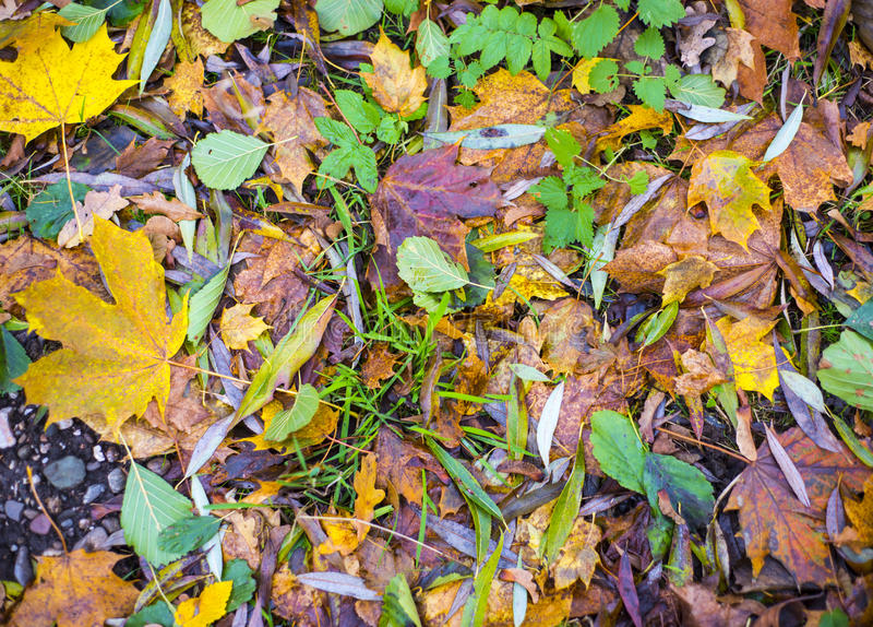 叶子地毯在地面上的 免版税库存图片