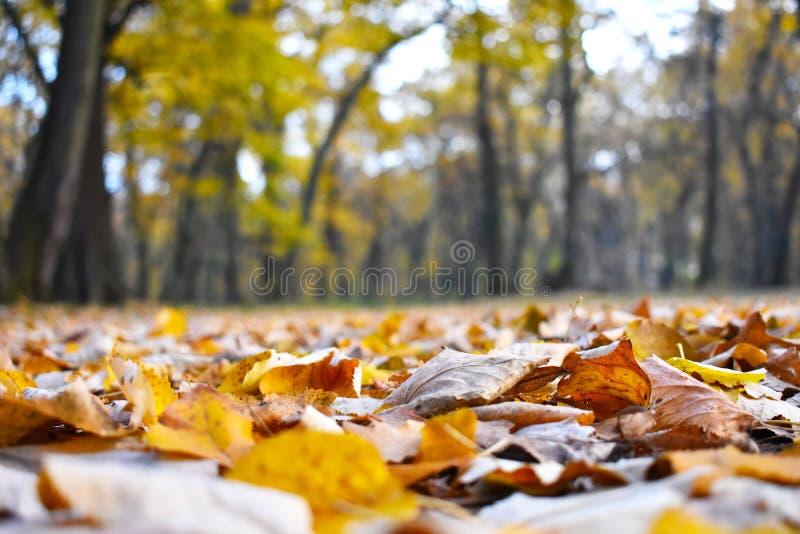 叶子地毯 免版税库存照片
