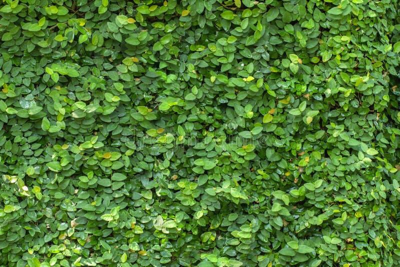 叶子墙壁 库存图片