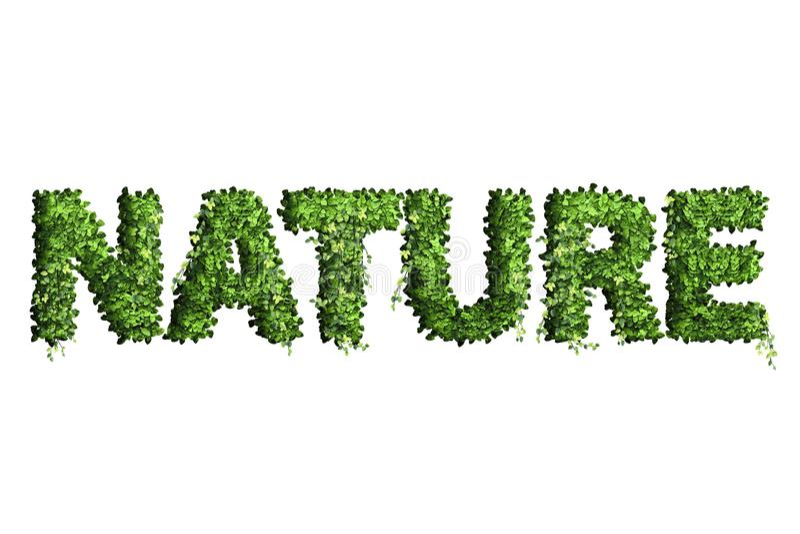 叶子字母表信件  叶子在白色ba隔绝的信件自然 库存例证