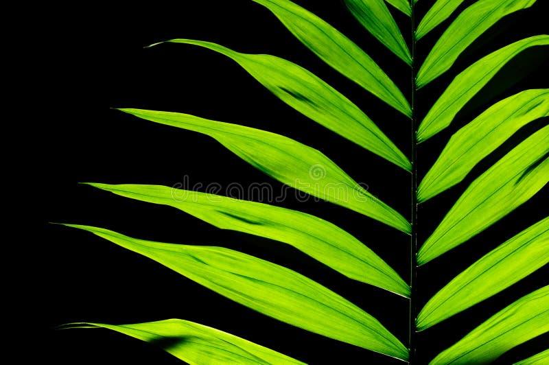 叶子室内植物 图库摄影