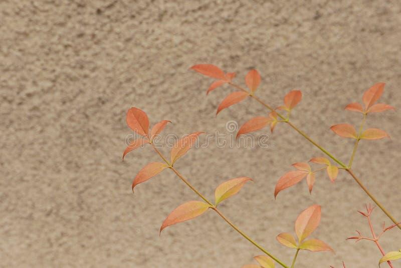 叶子对墙壁 免版税库存照片