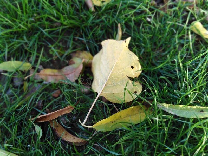 叶子小滴起点是往更新的一条道路 库存照片
