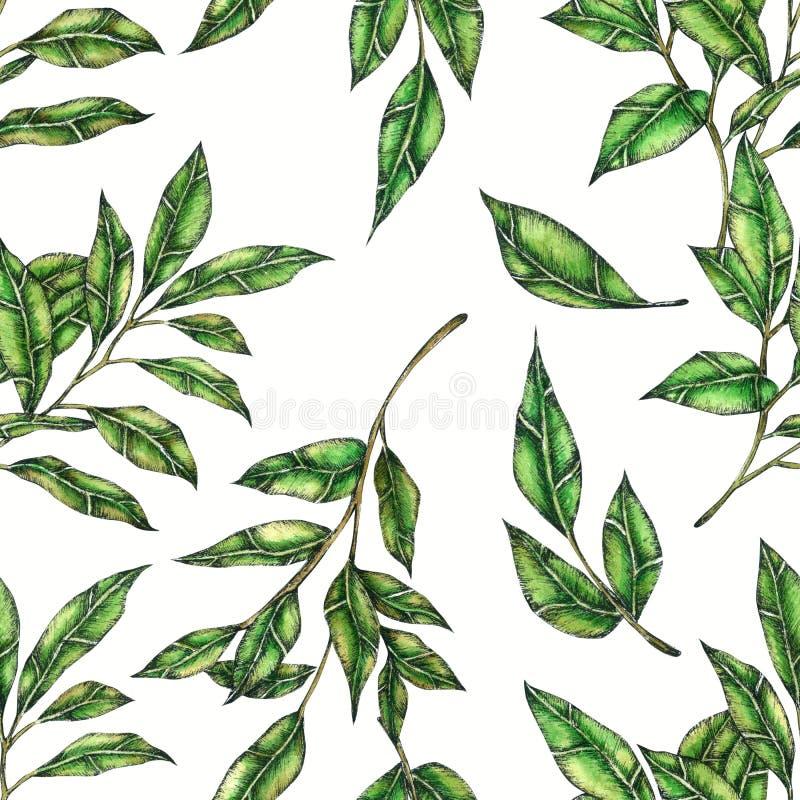 叶子无缝的样式手画在水彩 向量例证