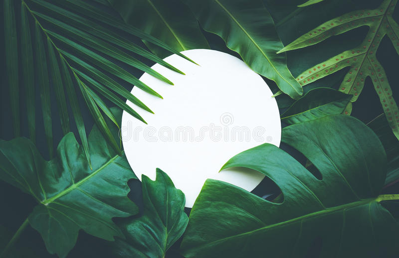 叶子有拷贝空间背景 热带植物 免版税库存照片