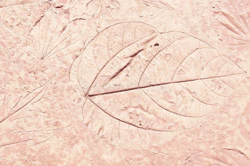 叶子标记在混凝土的 库存图片
