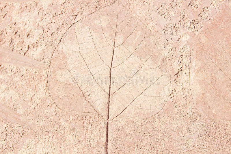 叶子标记在混凝土的 库存照片