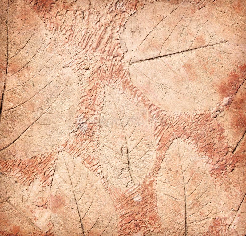 叶子标记在混凝土的 图库摄影