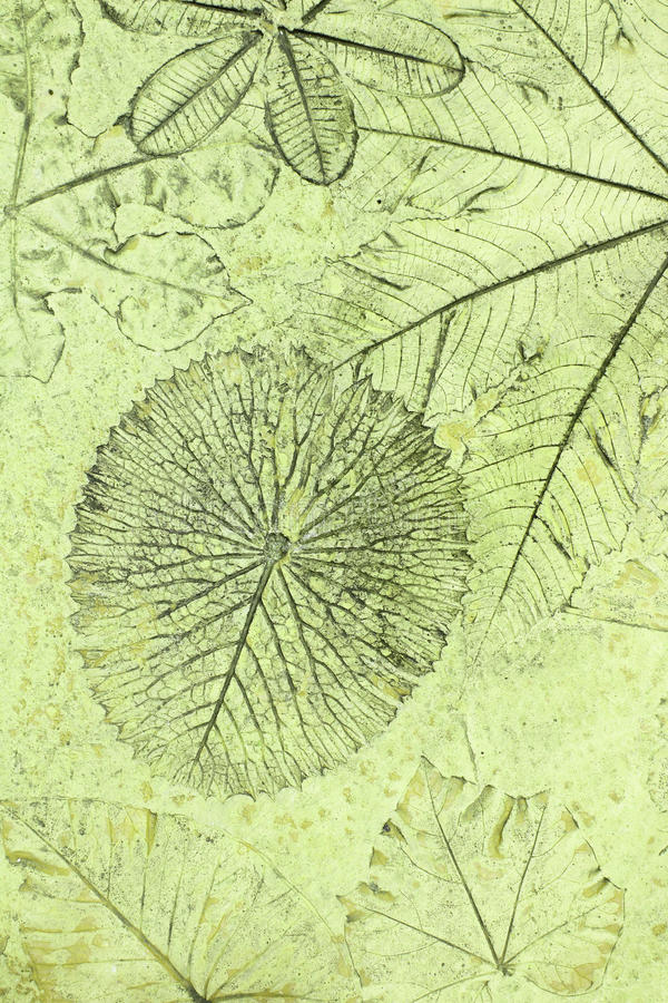 叶子标记在混凝土的 免版税库存图片