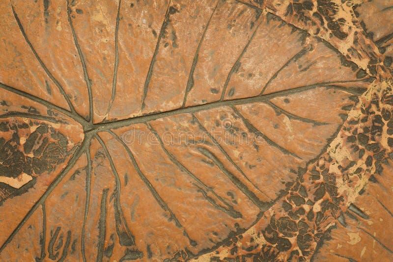 叶子标记在混凝土路面的 库存图片