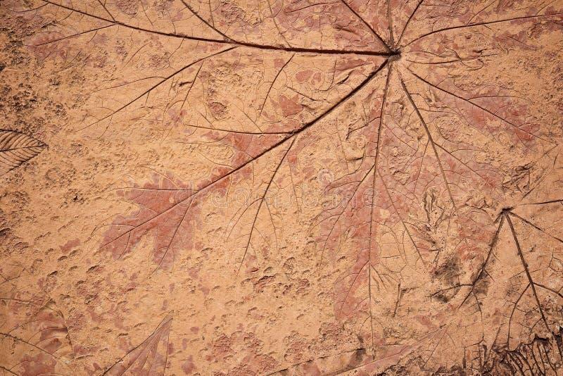 叶子标记在混凝土路面的 免版税库存图片
