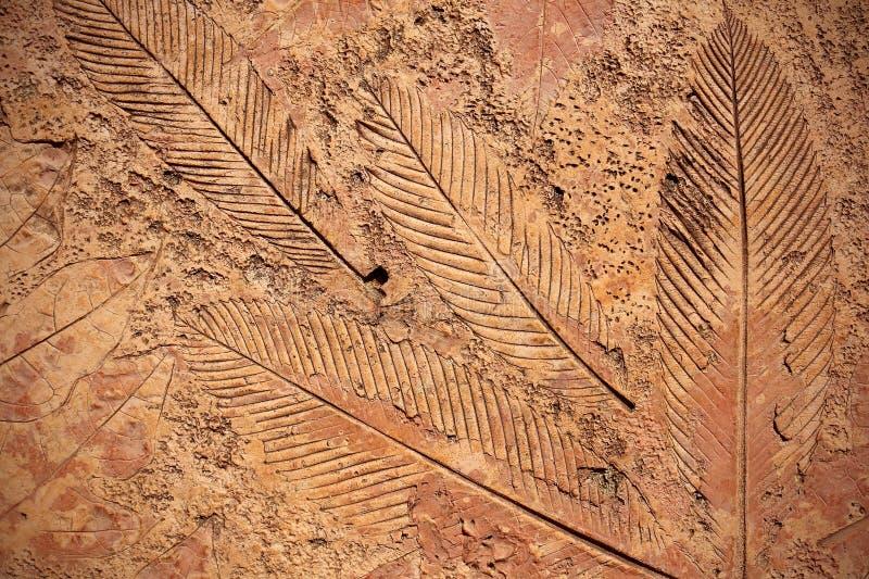 叶子标记在混凝土路面的 图库摄影