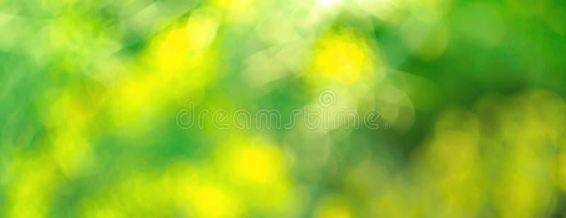 叶子树早晨庭院迷离选择聚焦抽象背景与bokeh的 免版税库存照片