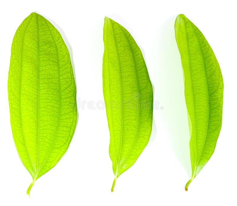 背景 壁纸 绿色 绿叶 树叶 植物 桌面 800_696图片