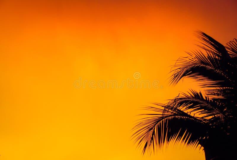 黑叶子棕榈树有橙色背景 库存图片