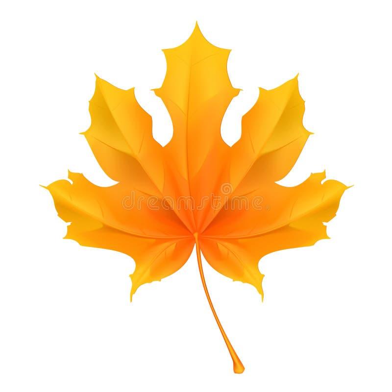 叶子槭树 向量例证