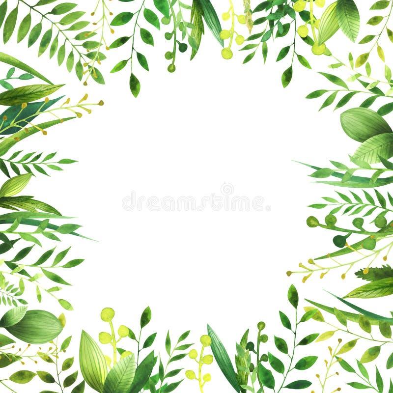 叶子水彩框架  库存图片