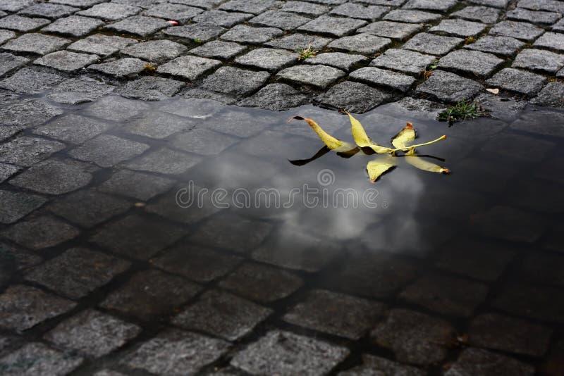 叶子水 免版税图库摄影