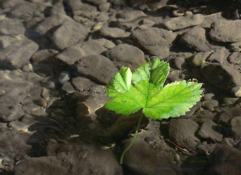 叶子水 库存图片