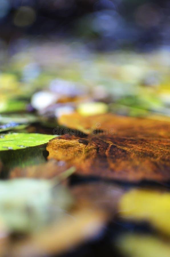 叶子池塘 图库摄影