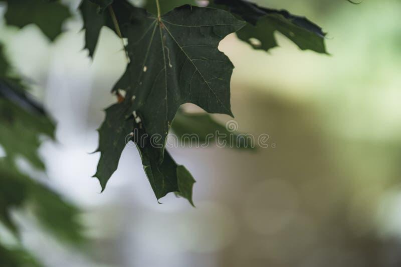 叶子的喜怒无常的照片在成为不饱和的公园-,葡萄酒神色 库存图片