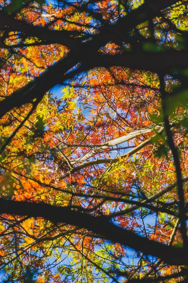 叶子的多种颜色在秋天期间的 免版税库存图片