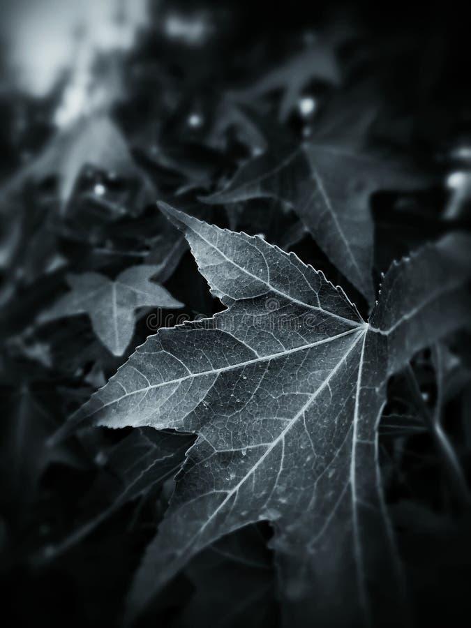 叶子的多血脉性的系统 图库摄影