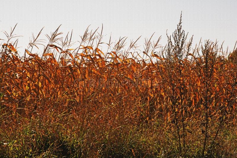 叶子的改变的颜色在秋天的 免版税库存图片