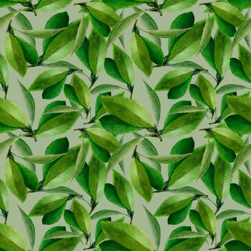 叶子的水彩无缝的样式在淡绿色的背景的 库存照片