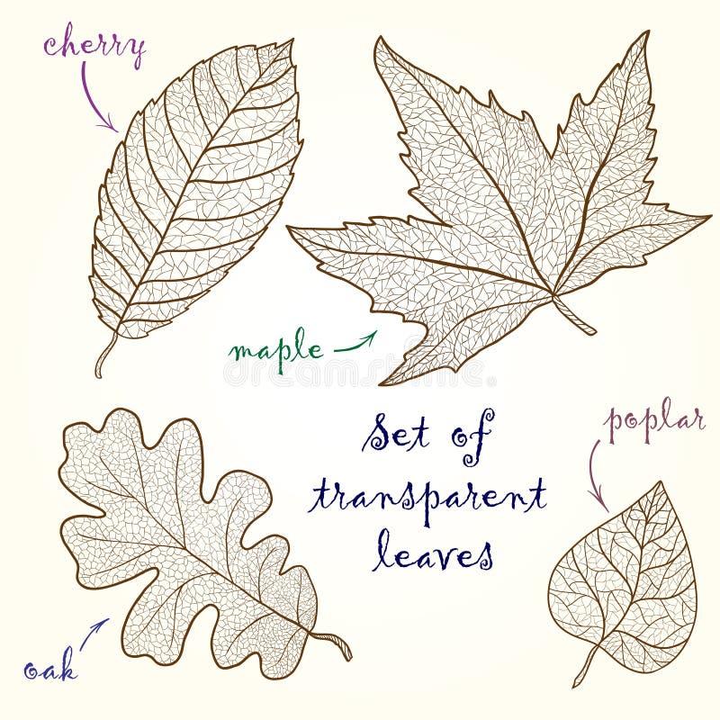 叶子的汇集:樱桃,橡木,槭树,白杨树。 皇族释放例证