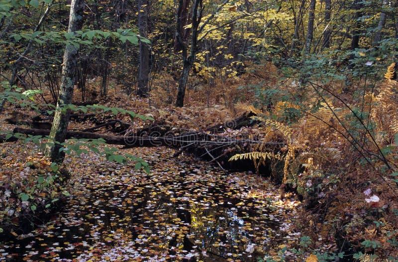 叶子盖了溪 免版税库存照片